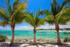 Het strand van Akumal in Mexico Stock Foto's