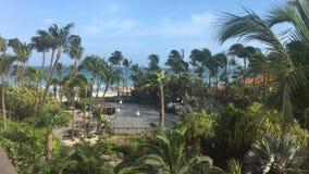 Het strand van Aruba met schitterende palmmening stock afbeelding