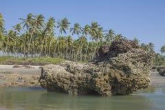 Het strand Goa van Ashvem Stock Foto's