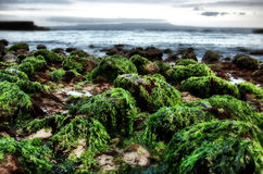 Het strand van Bali Royalty-vrije Stock Foto