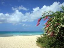 Het strand van Barbados Stock Afbeelding