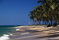 Het Strand van Brazilië Maceio Gunga in sta Alagoas Royalty-vrije Stock Afbeeldingen