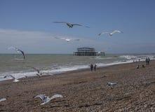 Het strand van Brighton, zeemeeuwen en de oude pijler op een zonnige dag Stock Afbeelding