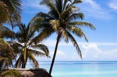 Het strand van Cuba met palmen en blauwe hemel Royalty-vrije Stock Foto