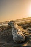 Het strand van de boomopening van een sessie Royalty-vrije Stock Foto's
