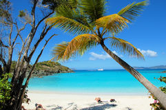 Het Strand van de boomstam Royalty-vrije Stock Afbeeldingen