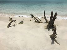Het strand van de boomstambaai royalty-vrije stock afbeelding