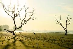 Het strand van de geheimzinnigheid Stock Afbeeldingen