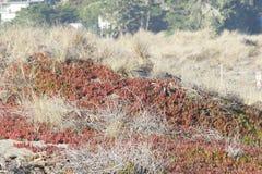 Het Strand van de geitrots - de noordwestelijke Sonoma-Provincie, Californië, is de mond van de Russische Rivier royalty-vrije stock fotografie