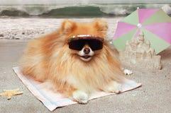 Het strand van de hond stock fotografie