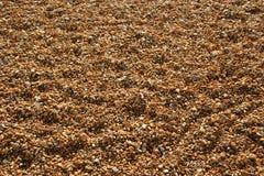 Het strand van de kiezelsteen - achtergrond Stock Afbeeldingen