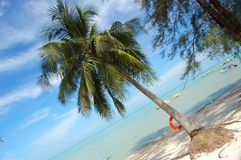 Het Strand van de klaver in Maleisië stock fotografie