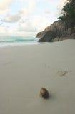 Het strand van de kokosnoot Stock Afbeeldingen