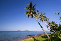 Het strand van de kokosnoot Stock Fotografie