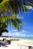 Het strand van de palm Stock Afbeelding