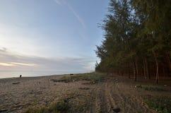 Het strand van de pijnboomboom in Kelantan, Maleisië royalty-vrije stock afbeeldingen
