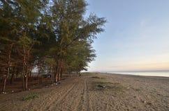 Het strand van de pijnboomboom in Kelantan, Maleisië stock fotografie