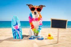 Het strand van de surferhond royalty-vrije stock fotografie