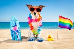 Het strand van de surferhond royalty-vrije stock foto's
