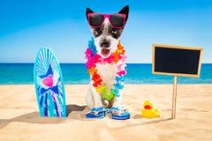Het strand van de surferhond stock afbeeldingen