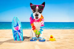 Het strand van de surferhond stock foto's