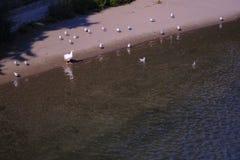 Het strand van de vogel, ontspannend gebied bij rivieroever royalty-vrije stock afbeeldingen