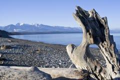 Het strand van de wildernis stock foto