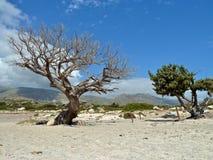 Het strand van Elafonisi, Kreta Stock Foto's