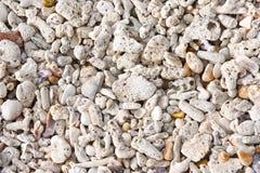 Het strand van het koraal en shell Stock Afbeeldingen