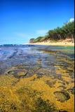 Koraalrif naast kust Stock Afbeeldingen