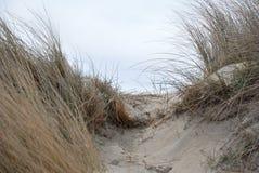 Het strand van Holland Stock Fotografie