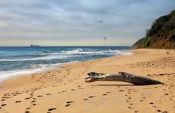 Het strand van Irakli op de Bulgaarse Kust van de Zwarte Zee Stock Fotografie