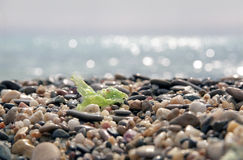 Het strand van kiezelstenen Royalty-vrije Stock Foto's