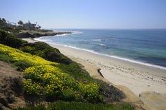 Het strand van La Jolla in de lente Stock Foto's