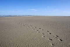 Het Strand van Langeoog Royalty-vrije Stock Foto's