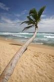 Het strand van Lankan van Sri royalty-vrije stock afbeeldingen