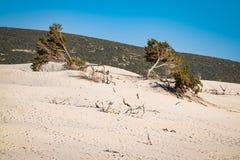 Het strand van Le Dune, Porto Pino, Sardinige, Italië Royalty-vrije Stock Afbeeldingen