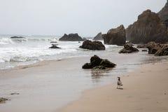 Het Strand van Malibu stock afbeeldingen