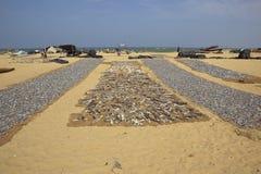 Het strand van Negombo Stock Afbeeldingen