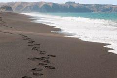 Het Strand van Nieuw Zeeland Royalty-vrije Stock Fotografie