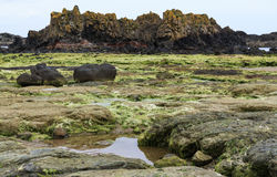 Het strand van Noord-Ierland Stock Fotografie