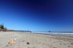 Het Strand van Ohope, Whakatane, Nieuw Zeeland stock foto