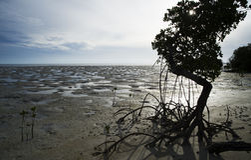 Het strand van Ouano Stock Afbeeldingen