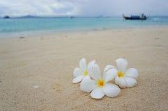 Het strand van Phi Phi-eiland royalty-vrije stock afbeeldingen