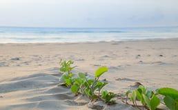Het strand van Prachuap Khiri Khan, Ao Manao Bay, Unseen Thailand stock foto