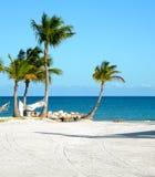 Het Strand van Punta Cana van de Bomen van de palm Royalty-vrije Stock Fotografie