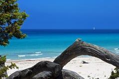 Het Strand van Saleccia, Corsica stock afbeelding