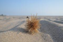 Het strand van Sawarna stock afbeeldingen