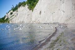 Het Strand van Scarboroughbluffs Stock Afbeelding