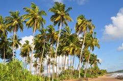 Het strand van Sri Lanka Stock Foto's